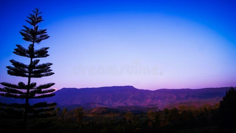 Pini e viste della montagna immagini stock libere da diritti