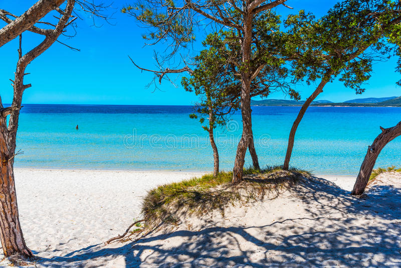 Pini ed acqua del turchese in spiaggia di Maria Pia immagine stock
