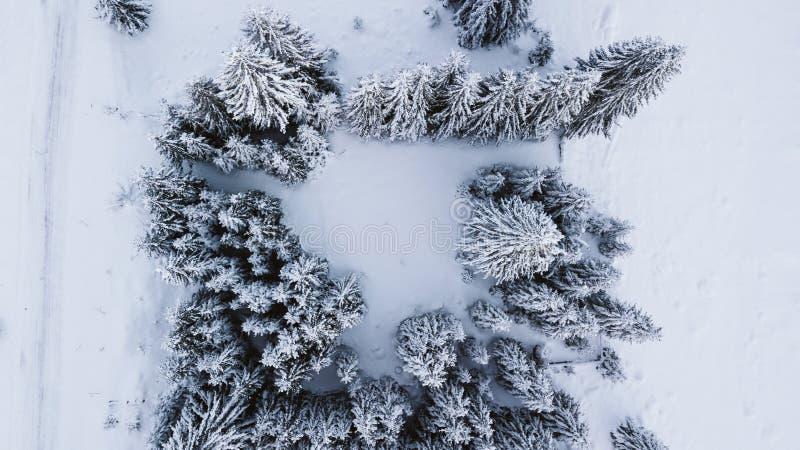 Pini innevati sopra la montagna, fotografata dall'aria immagini stock libere da diritti