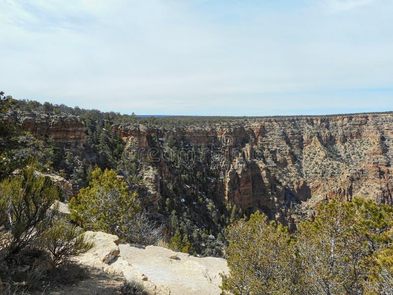 pini nel Grand Canyon immagini stock