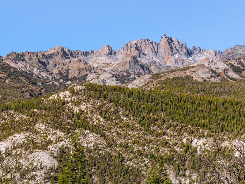 Pini sul fianco di una montagna irregolare nelle sierre orientali immagine stock