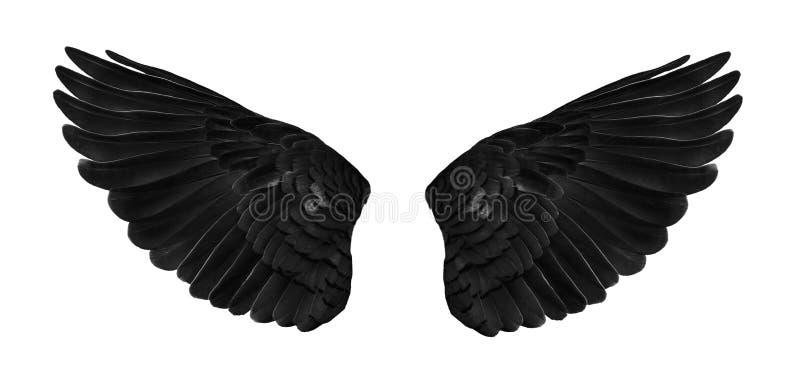 Pinion na rozkładać się czerni na białym tle zdjęcia royalty free