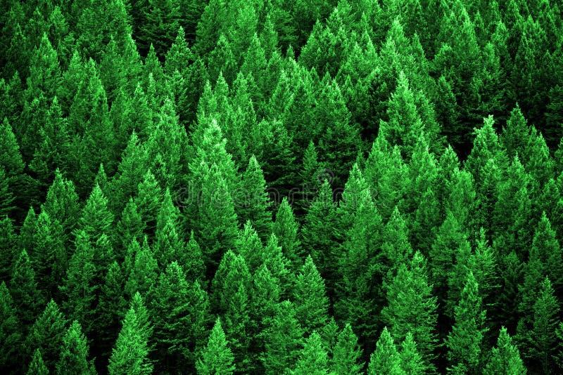 Pinjeskog i vildmarkberg arkivbild