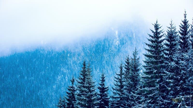 Pinjeskog i vinterberg royaltyfria foton