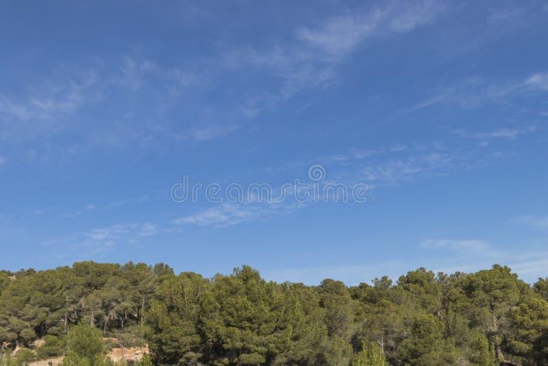 Pinjeskog med moln på bakgrund för blå himmel royaltyfri foto