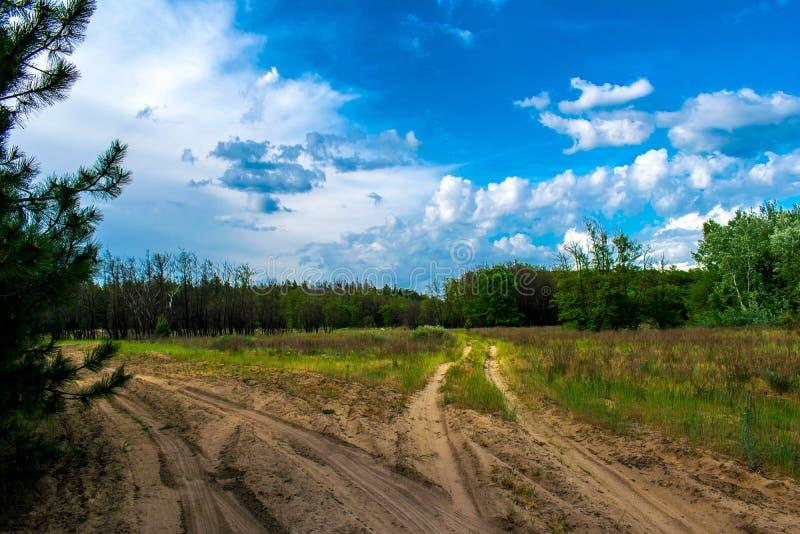 Pinjeskog vegetation i Ryssland i den Rostov regionen Granar och träd i den varma säsongen, över himlen med moln, i sommar och arkivfoto