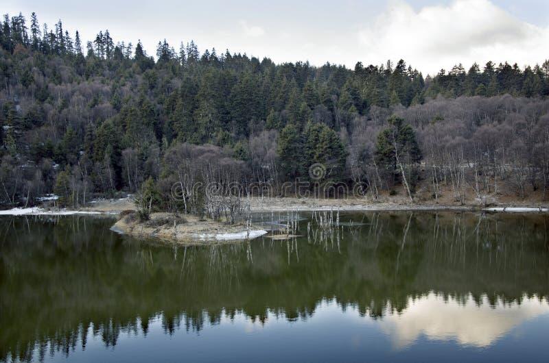 pinjeskogar och dess reflexioner  arkivbild