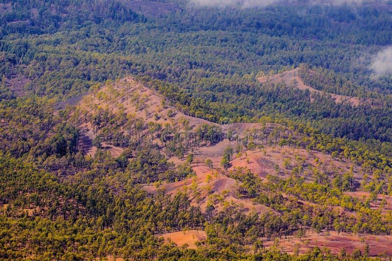 Pinjeskogar sikt från den Teide vulkan i Tenerife, Spanien fotografering för bildbyråer