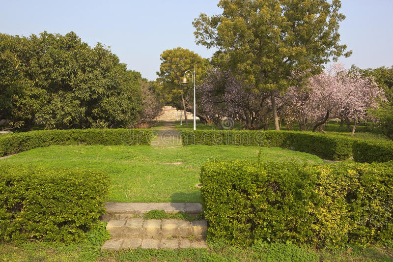 Pinjore gardens. Ornamental gardens with flowering cherry trees and mango trees with lawns and clipped hedges at pinjore gardens haryana india stock photography