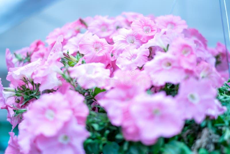 Pink лепестки стоковое изображение rf