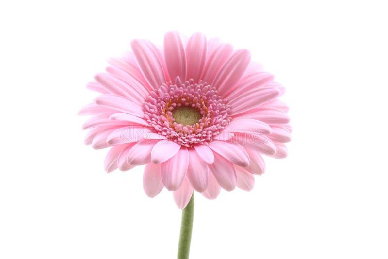 Pink stock photos