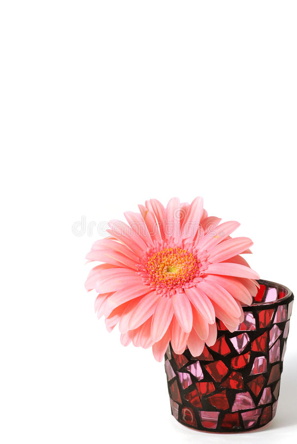 pink royaltyfria foton
