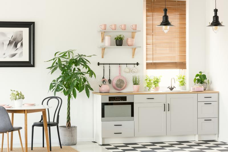 Pink accessories in grey kitchen interior with plant next to chairs and dining table. Real photo. Concept royalty free stock photos