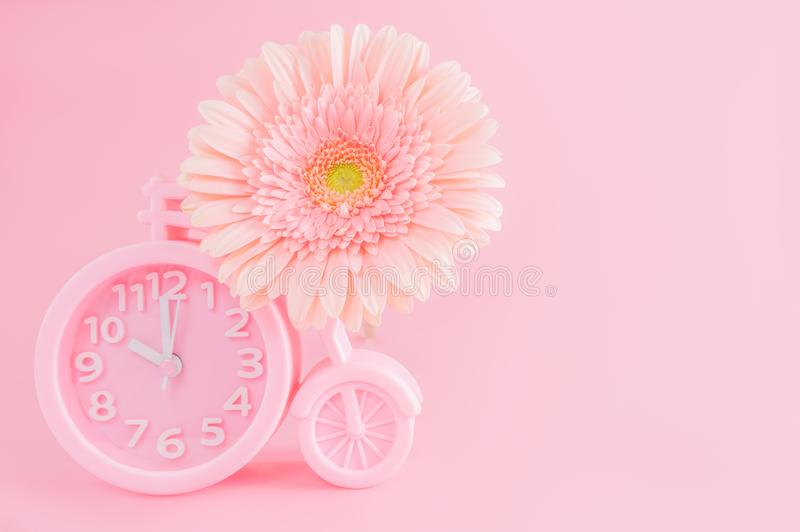 Pink alarm clock and gerbera flower on pink background. Good morning concept or time for presents. Pink alarm clock in the shape of bicycle and flower of pink stock image