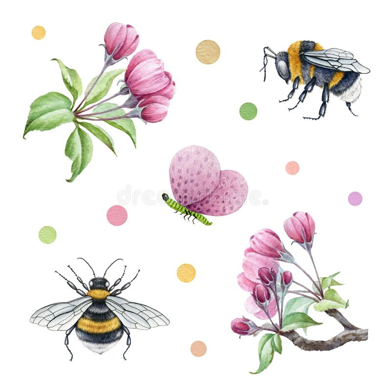 Free Pink Apple Tree Blossoms And Bee Watercolor Set. Tender Garden Spring Flowers And Bumblebee Element Collection. Spring Royalty Free Stock Photos - 206905298