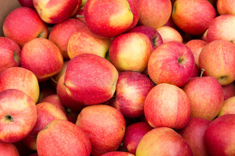 Pink Apples royalty free stock image