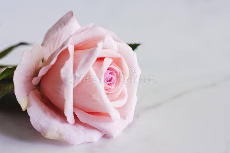 Pink artificial rose flower on white marble background royalty free stock photos