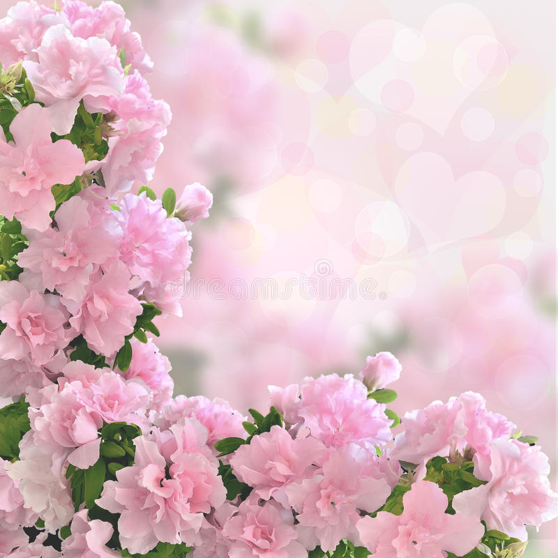 Pink azalea flowers romantic background. With bokeh light. Valentine or wedding card, love concept for celebration stock image
