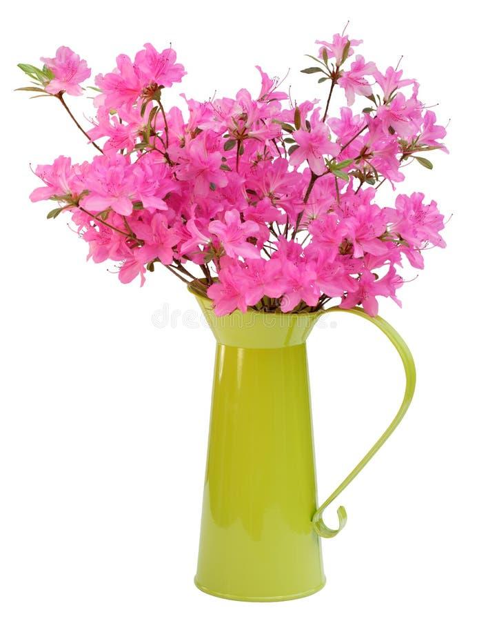 Pink azaleas in green jug stock images