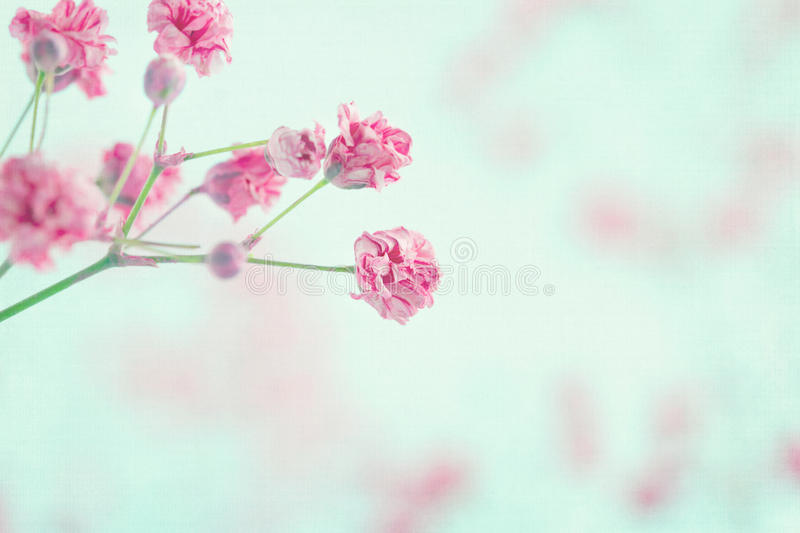 Pink babys breath flowers closeup stock photo image of decorative download pink babys breath flowers closeup stock photo image of decorative focus 31233862 mightylinksfo