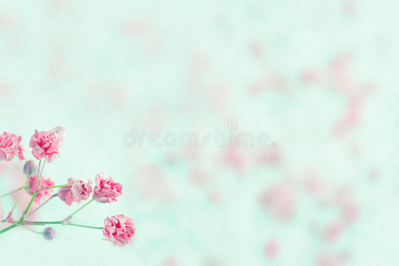 Pink baby 39 s breath flowers with copy space stock image for Tenue shabby chic