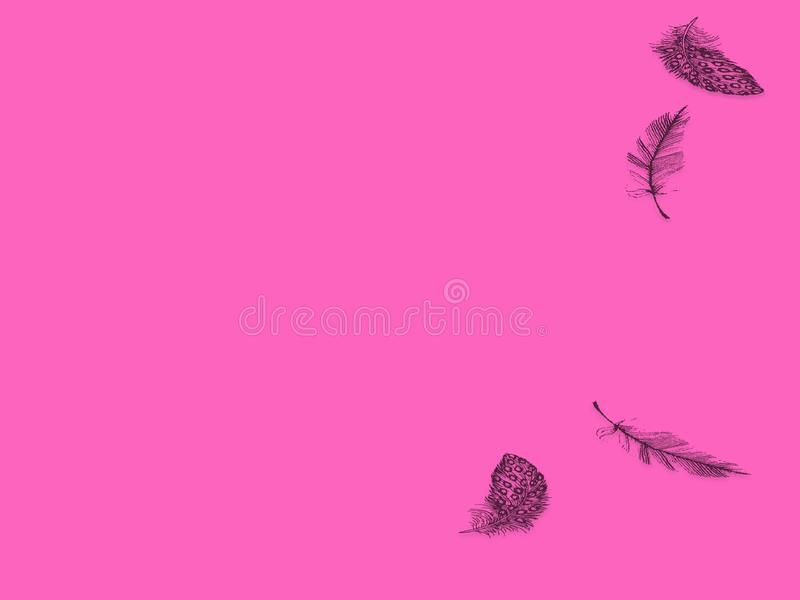 Pink background abstract with ornaments feathers stock photography