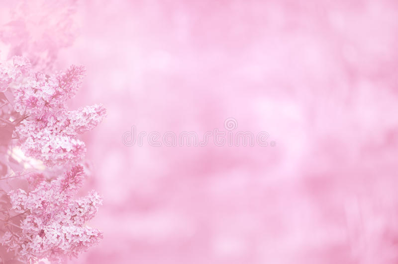 Pink background with lilac flowers stock photos
