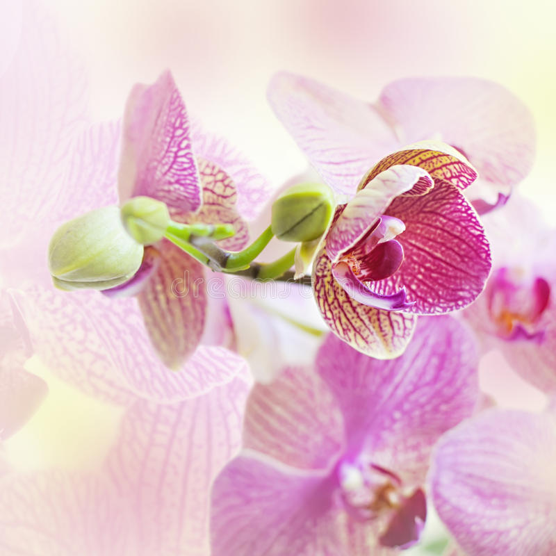 Download Pink Background With Orchid Flowers Stock Photo - Image of greeting, elegance: 42190050