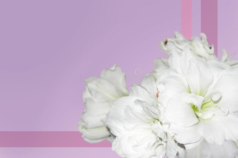 Pink background with white flowers stock photo