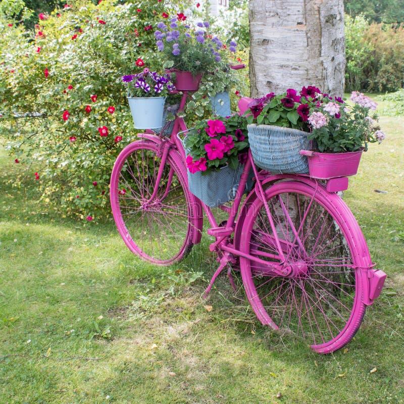 Pink bicycle stock photos