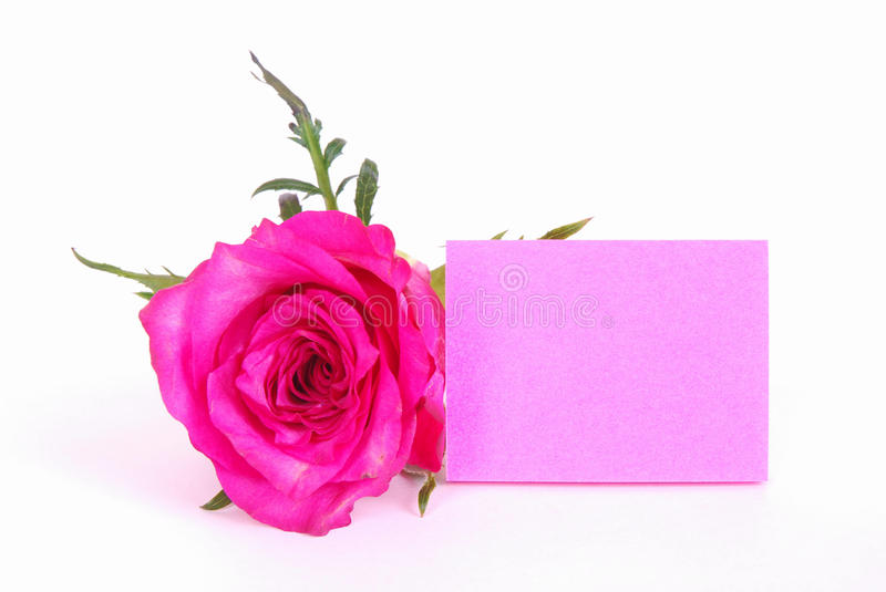 Pink rose with blank paper note royalty free stock images
