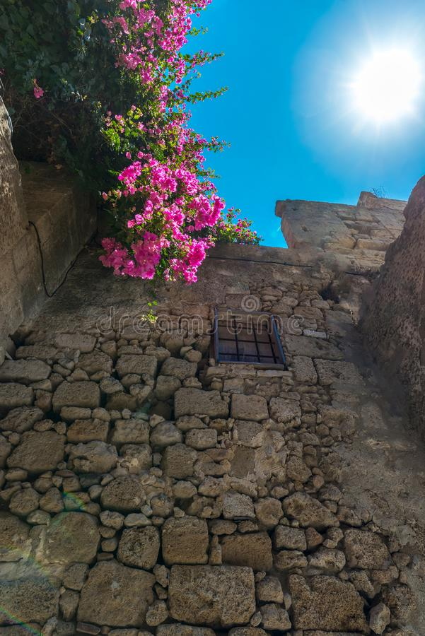 Pink blooming bougainvilleas bush on an old Mediterranean city wall, against a vibrant blue sky and strong sun with flares stock photography