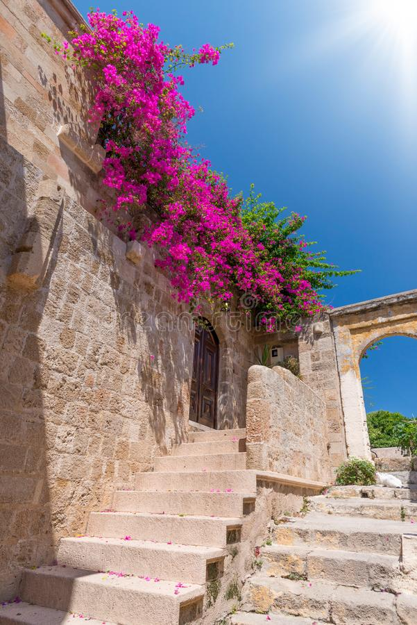 Pink blooming bougainvilleas bush on an old Mediterranean city wall, with ancient stairs and arches, against a vibrant blue sky royalty free stock image
