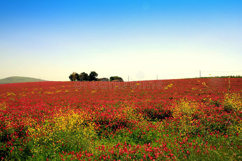Download Pink Blooming Flowers, Country Landscape Stock Photo - Image: 11409050