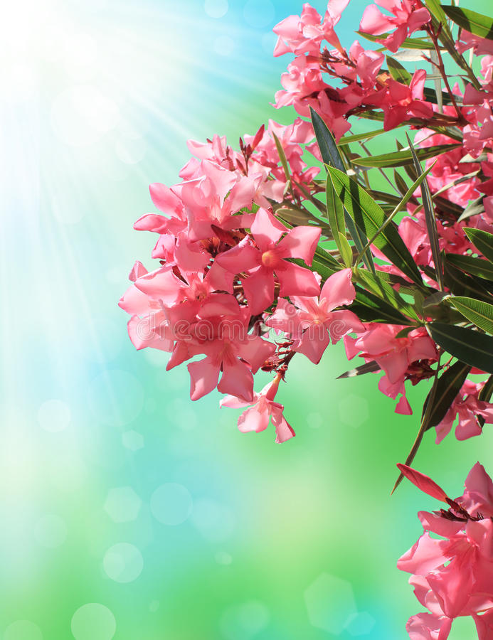 Download Pink blossom stock photo. Image of green, colorful, background - 20191792