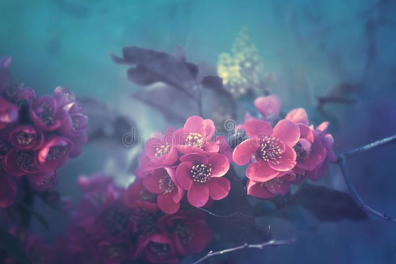 Pink blossoms in under water like ambience. Peaceful fine art fantasy stock images