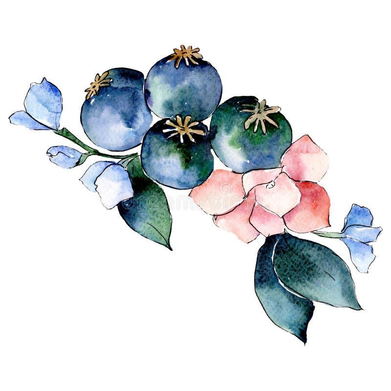 Pink blue botanical flower. Isolated bouquet illustration element. Green leaf. Watercolor background set. Pink blue botanical flower. Isolated bouquet stock illustration