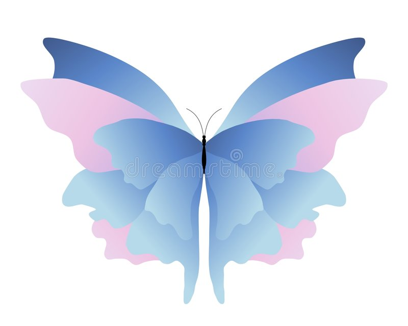Pink blue butterfly stock photo