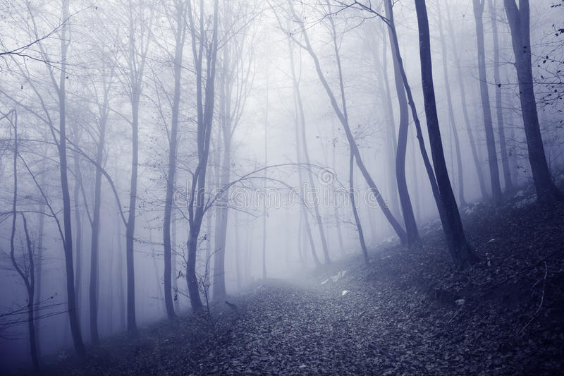Pink blue colored foggy forest path royalty free stock photography
