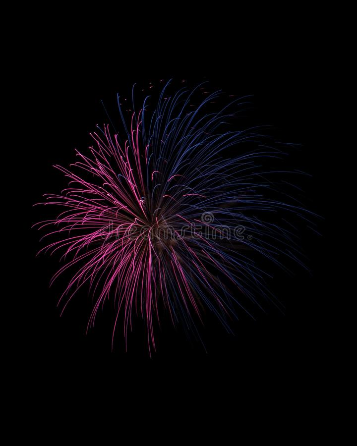 Pink and blue traces of firework explosion isolated on black royalty free stock photo