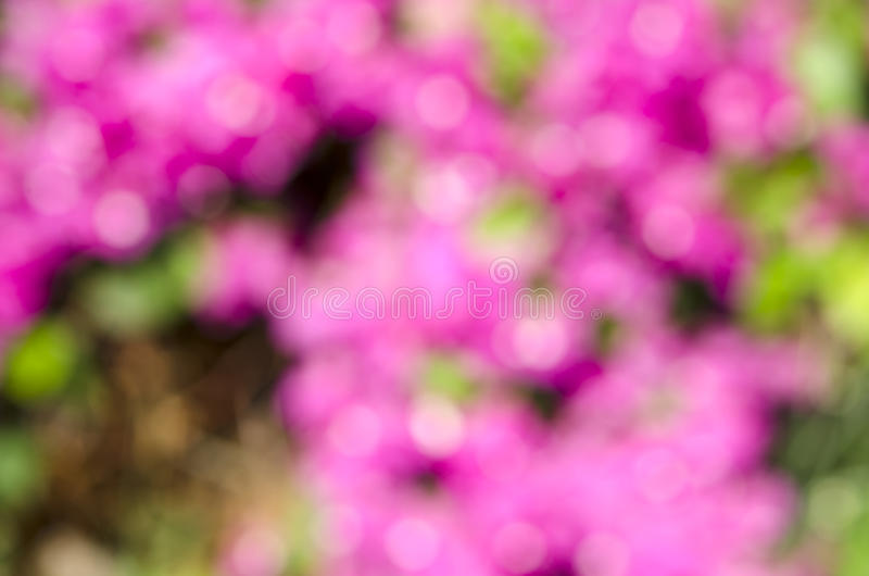 Pink bokeh abstract backgrounds. royalty free stock images