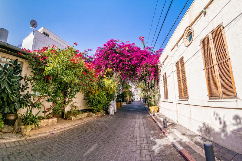 Pink bougainvillea flowers in historic Neve Tzedek district. royalty free stock images