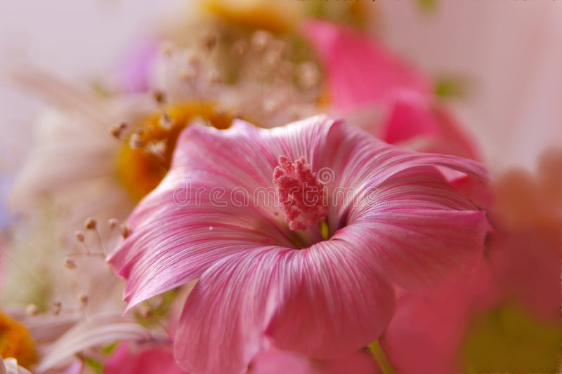 Download Pink bouquet stock photo. Image of floral, autumn, fragile - 552516