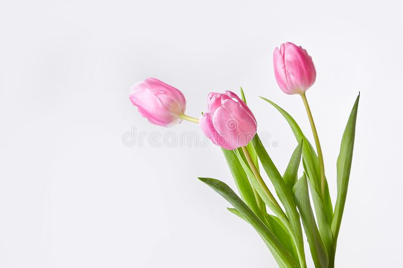 Pink bouquet of tulips in a vase royalty free stock photos