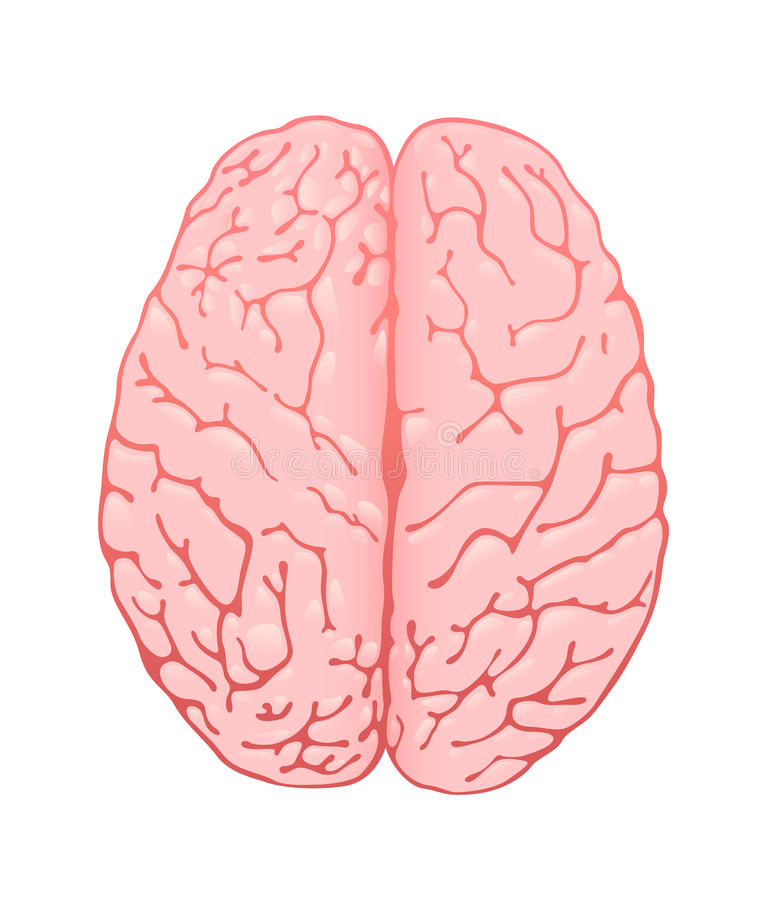 Pink brain a top view stock illustration. Illustration of ...