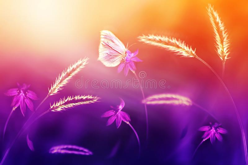 Pink butterfly against of wild flowers and grass in purple and yellow tones. Summer natural artistic background. Selective focus. stock photo