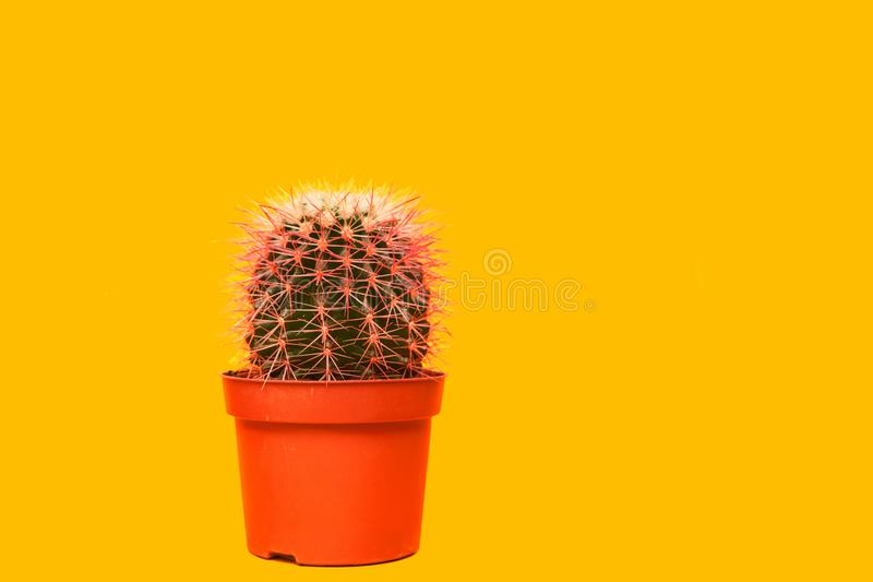 Pink Cactus. Art Gallery Fashion Design. Minimal Stillife. Concept on Yellow background stock images