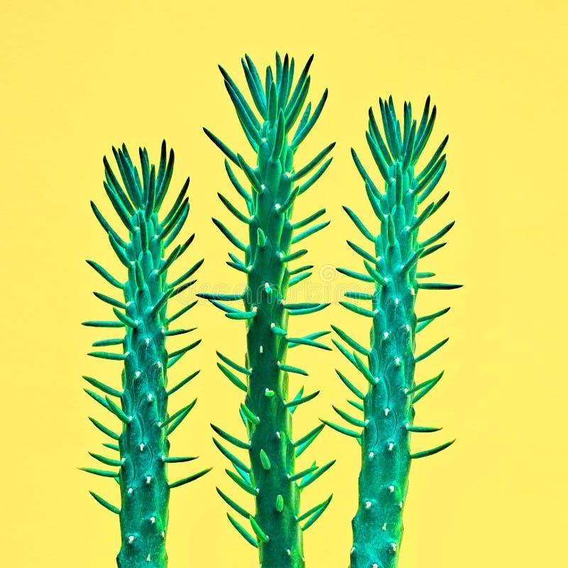Pink Cactus Fashion Set. Art gallery Design. Minimal. Neon Cactus Set. Minimal Fashion Stillife. Art gallery Design. Vanilla Trendy Bright Colors. Green Cactus royalty free stock photos