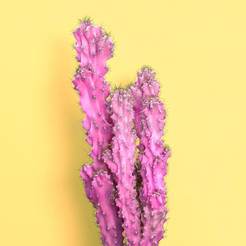 Pink cactus. Minimal Fashion. Creative Surreal art stock photography