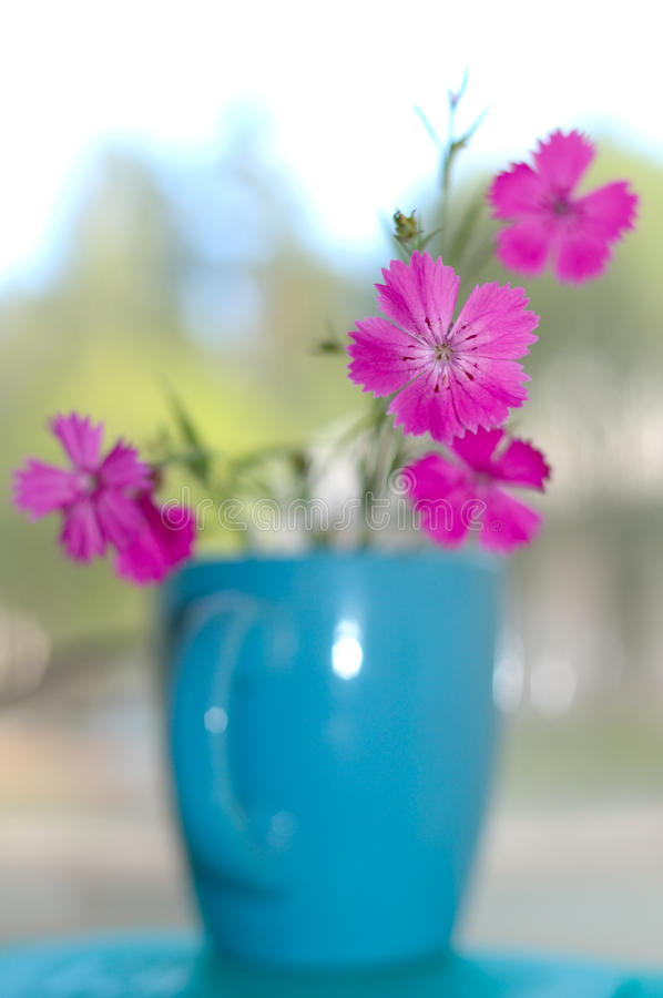 Download Pink carnation flowers. stock photo. Image of blurred - 10992812